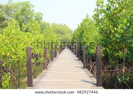Mangrove trees of Thung  Prong Thong forest in Rayong at Thailand
