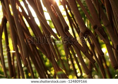 Mangroves - stock photo
