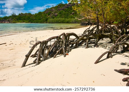 Mangroves at low tide, Seychelles - stock photo