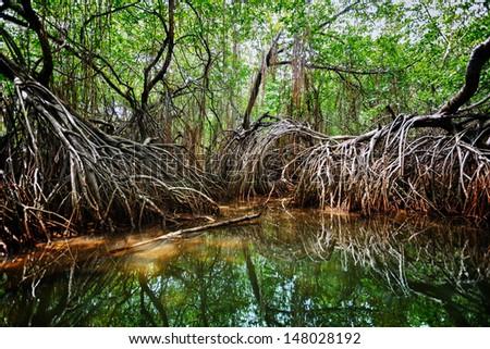 Mangroves in the delta of the tropical river. Sri Lanka, Bentota - stock photo