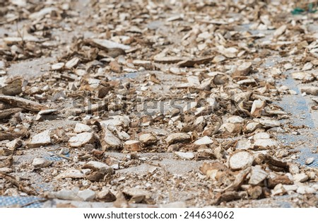 Manioc root is drying under sunlight in Mekong delta, Vietnam. Cassava is planted almost everywhere in Vietnam and its root is amongst the cheapest sources of food there