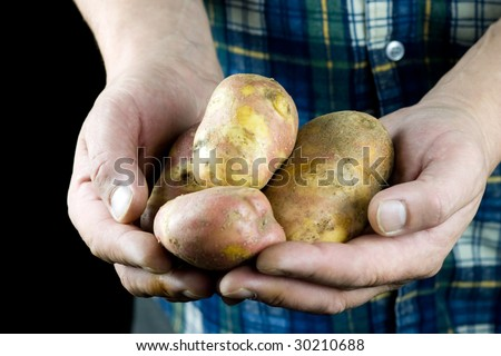 Mans hands holding raw potatoes