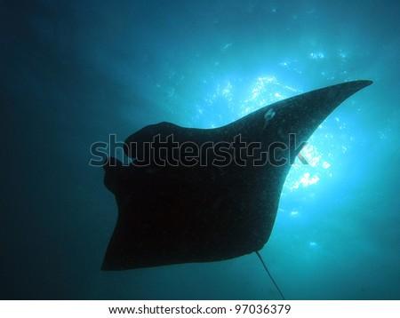Manta Ray Silhouette - Komodo, Indonesia - stock photo