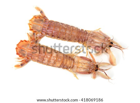 mantis shrimp isolated on a white background