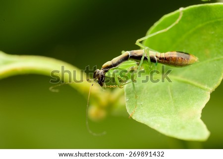Mantis standing on leaf - stock photo