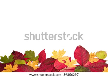 Many autumn leaves on the isolated white background