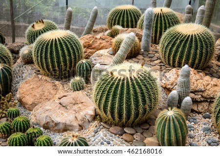 Many beautiful varieties of cactus and value.