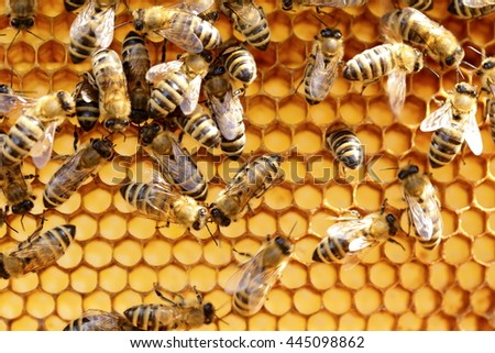 many bees are working on a yellow hive - stock photo