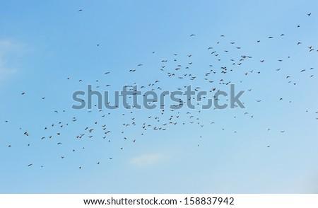 Many birds in the sky - stock photo