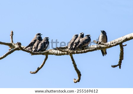 Many birds stand on tree isolated on blue. - stock photo