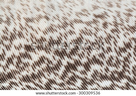 Many brown and white fibers on a bird feather - stock photo