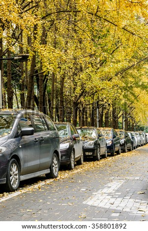 Many cars stop on the edge of the ginkgo trees