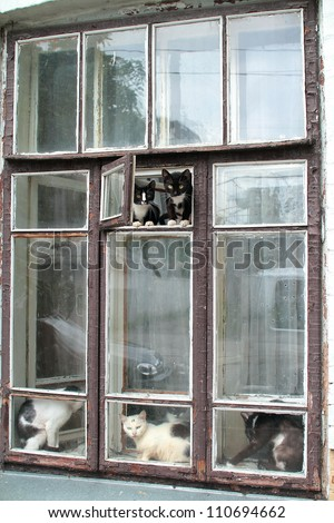 many cats sitting on the window - stock photo