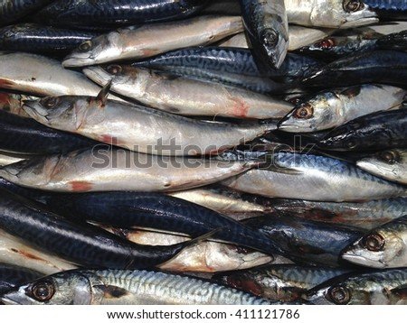 many cold sea food small raw fresh fish laying on ice on dirty and bad arrange display for sale counter in a super market - stock photo