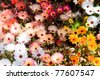 many colorful flower garden - stock photo