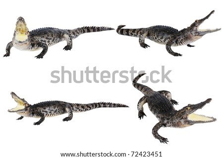 Many crocodile stuff isolate on the white. - stock photo