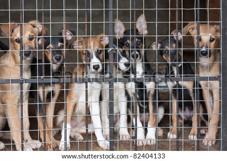 Many cute puppies locked in the cage - stock photo