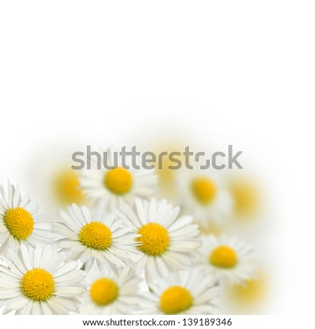 Many daisies on the blurred background - stock photo
