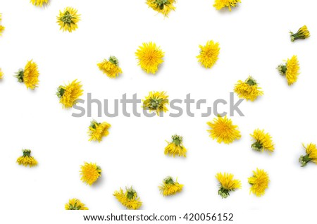 Many dandelion blooms isolated on white background as natural pattern.  - stock photo