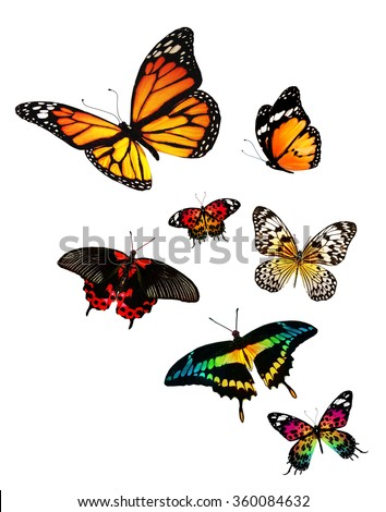 Many different butterflies flying, isolated on white background - stock photo