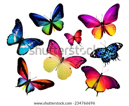 Many different butterflies, isolated on white background - stock photo