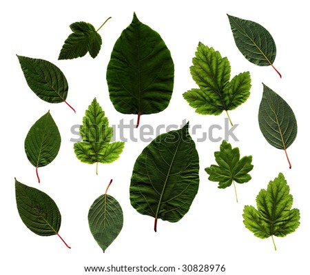 many different green leaves isolated on white