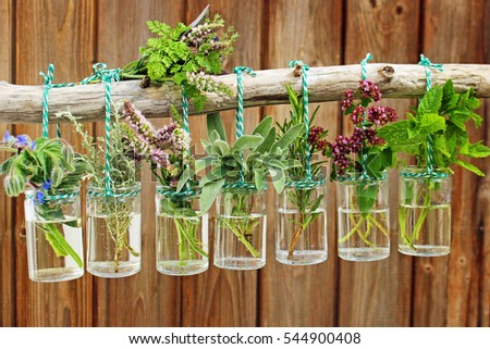 Many Different Herbs Hanging Glass Vases Stock Photo Edit Now
