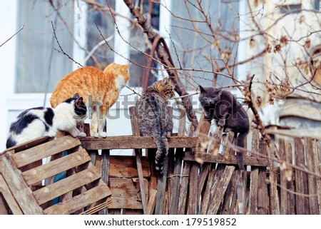 many different street cats  - stock photo