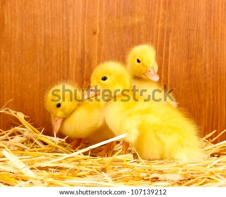 Many duckling on straw on wooden background