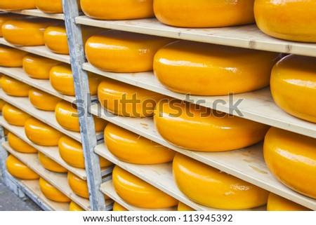 Many Dutch cheeses - stock photo
