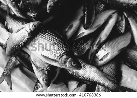 Many fish caught in the market. Black and white photo. - stock photo