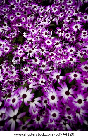 many flower planted in someone garden to make a great nice flower bed - stock photo