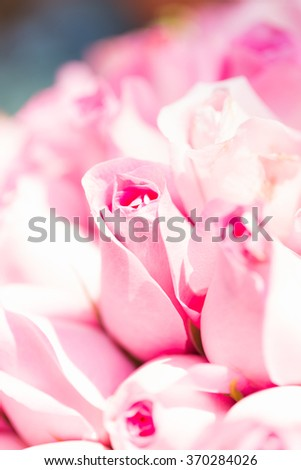 Many flowering pink roses Pink roses in a bouquet of flowers. - stock photo