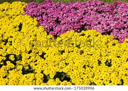 many flowers in the park for background - stock photo