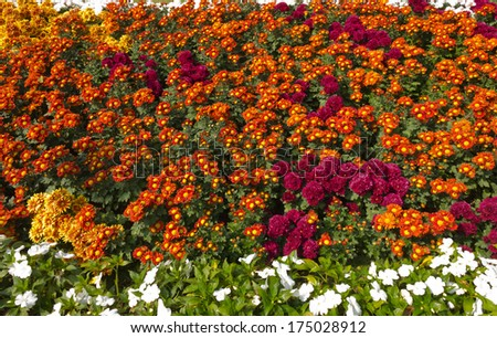many flowers in the park for background