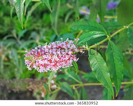 Many flowers on green in spring - stock photo