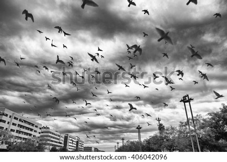 Many flying pigeons on city cloudy sky background. Black and white