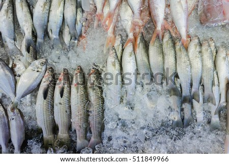 Many fresh Gray Mullet and another fish lay on ice at supermarket. Top view shot.