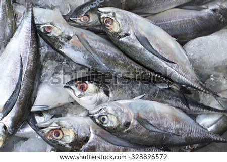 Many fresh mackerel freeze - stock photo