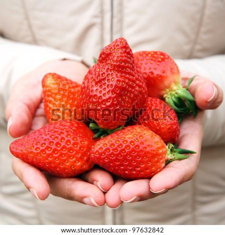 Many fresh strawberries on hand - stock photo