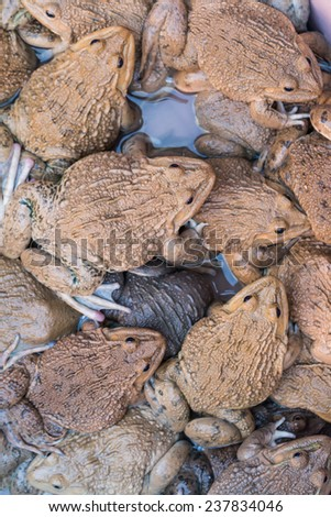 Many frogs in the swamp background - stock photo
