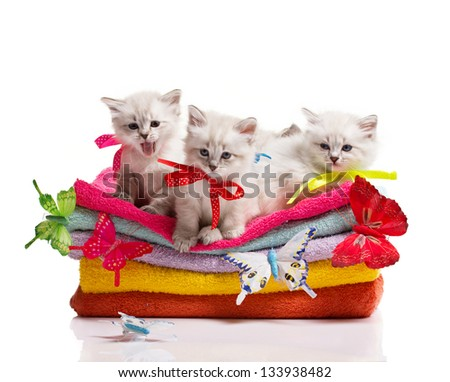 many kittens,stack of towels and colorful  butterflies on white background - stock photo