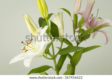 Many lily flowers in bloom on a flower bouquet - stock photo