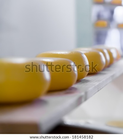 Many matured cheeses. Dutch cheese on shelves - stock photo