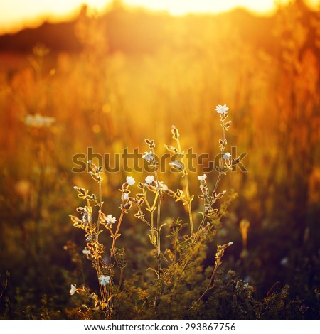 many meadow flowers in sunny autumn field in evening