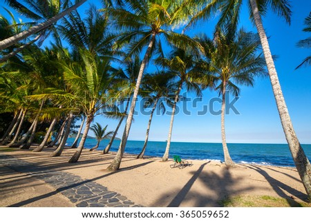 many palm trees on the tropical beach - stock photo