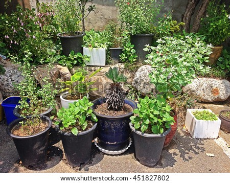 Many potted plants are in flower bed/plants and pots