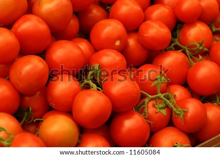 many raw uncutted tomatoes with branches