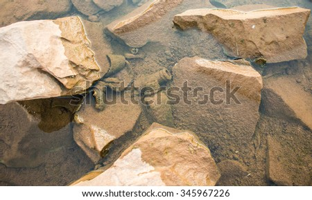 Many rock is brown and gardage underwater - stock photo
