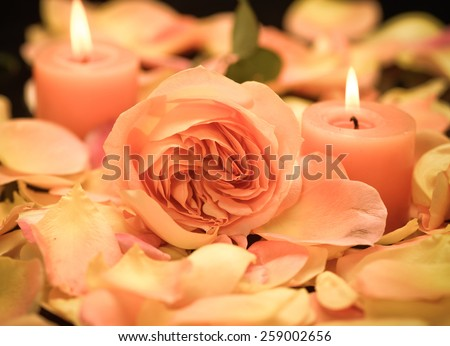 Many rose with petals with two candle  - stock photo